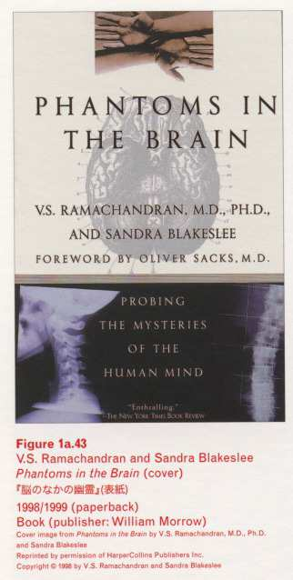Caption left top: · Figure 1a.43 · V.S. Ramachandran and Sandra Blakeslee · Phantoms in the Brain (cover) ·  (paperback) · Book (publisher: William Morrow)
